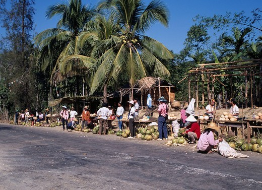 Blue sky, Palm tree, Road, Roadside coconut Real sale, Hainan Dao, China : Stock Photo