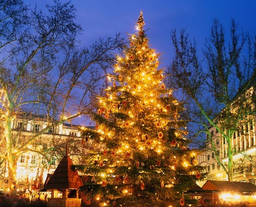 Christmas Market, Christmas tree, Bereshumalti Square, Budapest, Hungary : Stock Photo