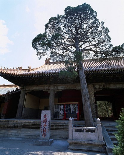 Tree, Tile, Confucius Temple, World Heritage, Qufu, Shandong, China, August : Stock Photo