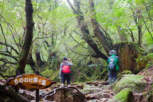 Shiratani Unsui valley, Forest of The Princess Mononoke, Yakushima Island, Kagoshima, Japan : Stock Photo