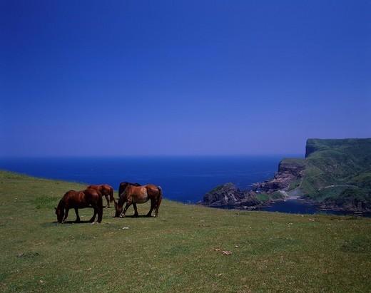 Stock Photo: 4034-73875 Horse The Akao view place Kuniga_Kaigan Nishinoshima Oki Shimane Japan Blue sky Sea Prairie Green