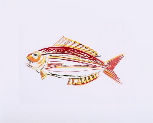 golden threadfin bream, fish, illustration : Stock Photo