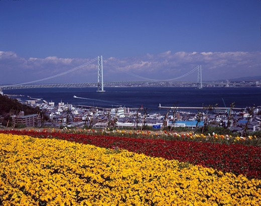 Stock Photo: 4034-77609 Akashi Strait Bridge, Station of a way Awaji, Flower Bed, Flower, Awaji Island, Hyogo, Japan
