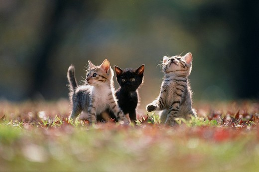 Kitten Cat, Animal : Stock Photo