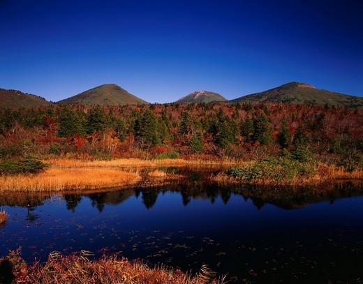 Suiren marsh, Hakkoda mountain range, Towada, Aomori, Japan : Stock Photo