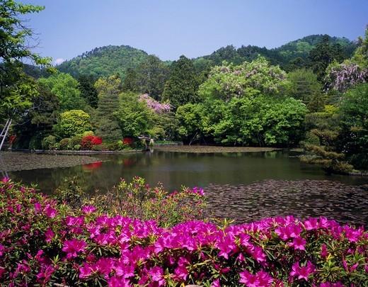 Azalea Fresh green Ryoan Temple Temple Temple Kyoyo Pond Kyoto Kyoto Japan Blue sky Mountain Green Flower Plant Purplish red : Stock Photo