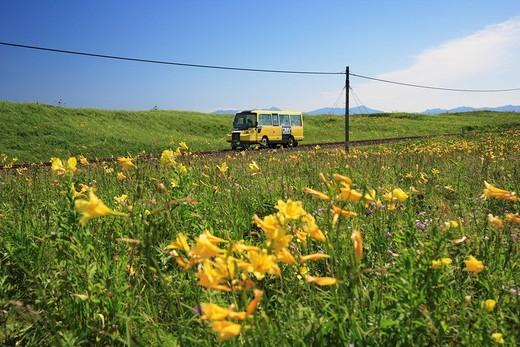 JR Senmo Main Line, DMV, Vehicle, Koshimizu Primeval Flower Garden, Hemerocallis yezoensis, Koshimizu, Hokkaido, Japan : Stock Photo