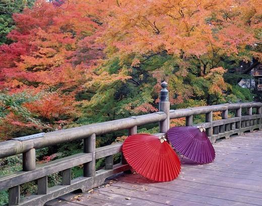 Autumn, cricket bridge, Yamanaka, Ishikawa, Japan : Stock Photo