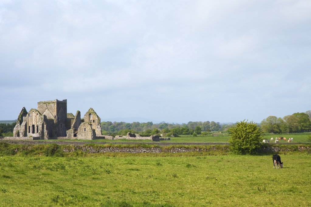 Ruins of an abbey, Hore Abbey, Cashel, County Tipperary, Munster, Republic of Ireland : Stock Photo