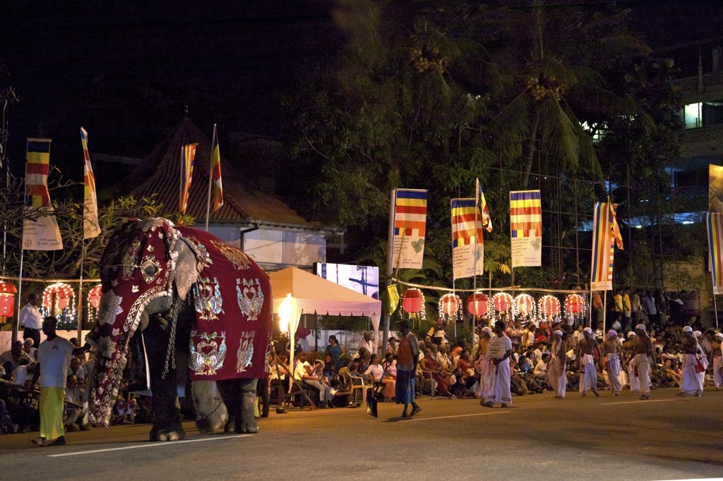 Stock Photo: 4042-2097 Sri Lanka, Colombo, Ceremonial elephant in the Navam Maha Perahera