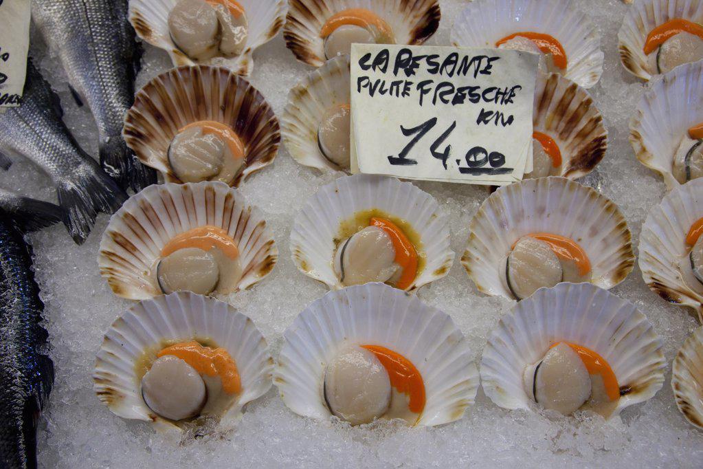 Scallops for sale at a market stall, Rialto, Venice, Veneto, Italy : Stock Photo