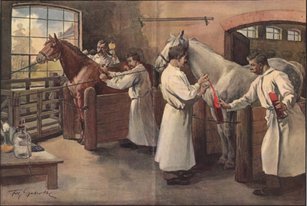 Stock Photo: 4048-5920 Diphtheria antitoxin was made by inoculating horses with diphtheria bacteria, then bleeding the animals to obtain their blood serum. The serum neutralized the diphtheria toxin causing the patient's symptoms.