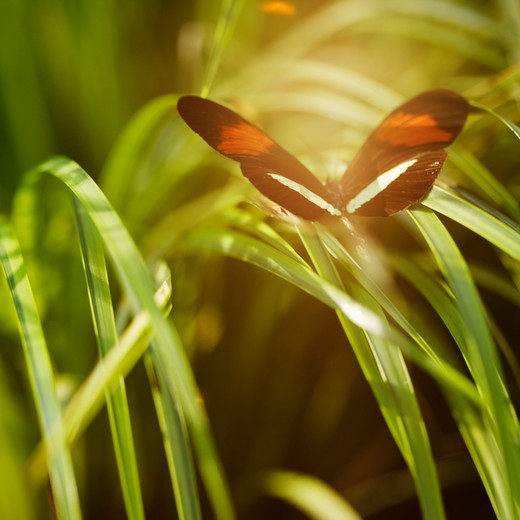 Stock Photo: 4049-127 Butterfly landed on a grass