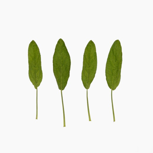 Stock Photo: 4049R-184C Close-up of four green leaves