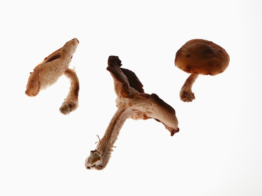 Close-up of assorted mushrooms : Stock Photo