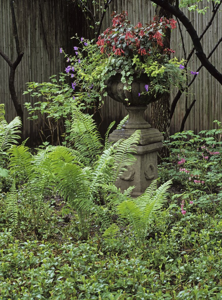 Garden.  Antique stone urn, wood privacy fence, ferns springtime : Stock Photo