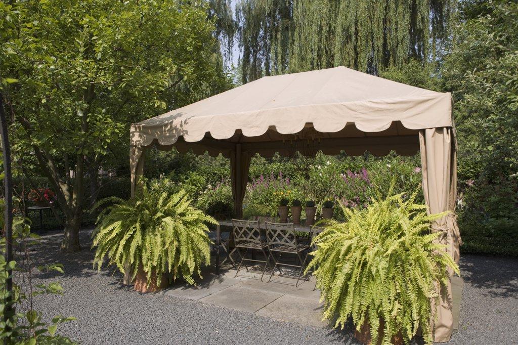 Stock Photo: 4053-11755 GAZEBOS: Garden, patio angled view of fabric gazebo, two large Boston ferns
