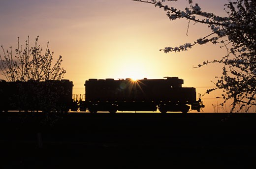 A Santa Fe Freight Train at Sunset, Almond Orchards near Bakersfield, Kern County, California (CV) : Stock Photo