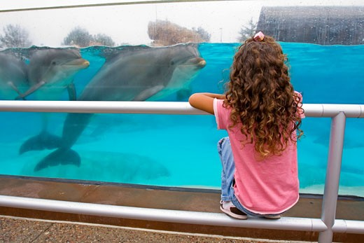 Young Girl Watching Dolphins, Dolphin Discovery Center, Sea World, Sans Diego County, San Diego, California, United States (MR) : Stock Photo