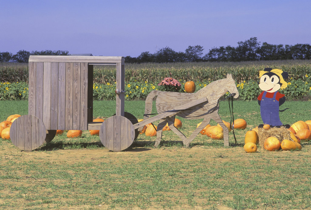 Pumpkin Patch, South Hampton, Long Island, New York : Stock Photo