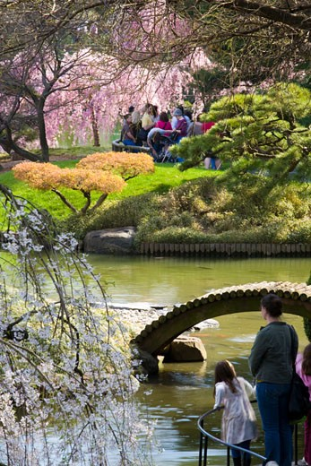 In the Japanese Garden at Brooklyn Botanical, New York City : Stock Photo