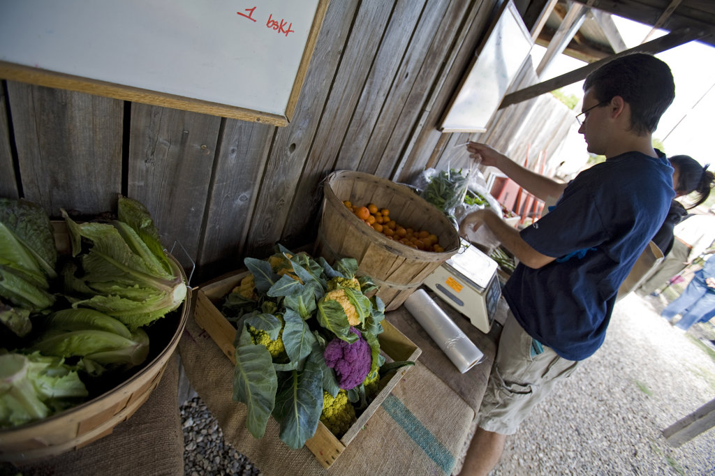 The Community Supported Agriculture program allows members to take home seasonal produce on a weekly basis, by pre-paying a year for either a small or large share. : Stock Photo