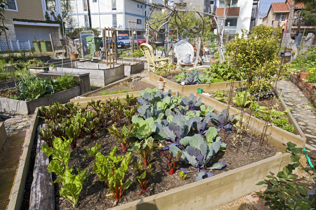 Stock Photo: 4055-5676 Greens growing in containers in Eastwind Community Gardens, Marina Del Rey, Los Angeles, California, USA