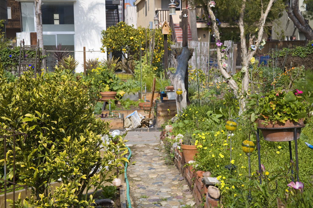Eastwind Community Gardens, Marina Del Rey, Los Angeles, California, USA : Stock Photo