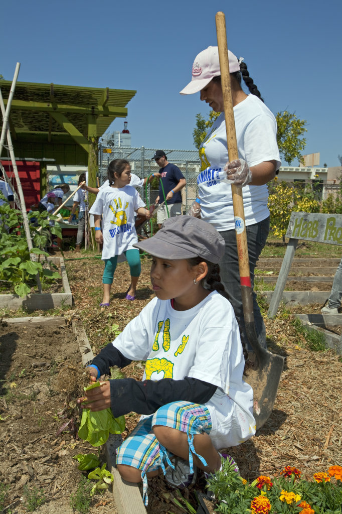 Stock Photo: 4055-5895 Students, parents and teachers work on the garden at the 24th Street School garden on Big Sunday, the largest annual citywide community service event in America, West Adams, Los Angeles, California, USA