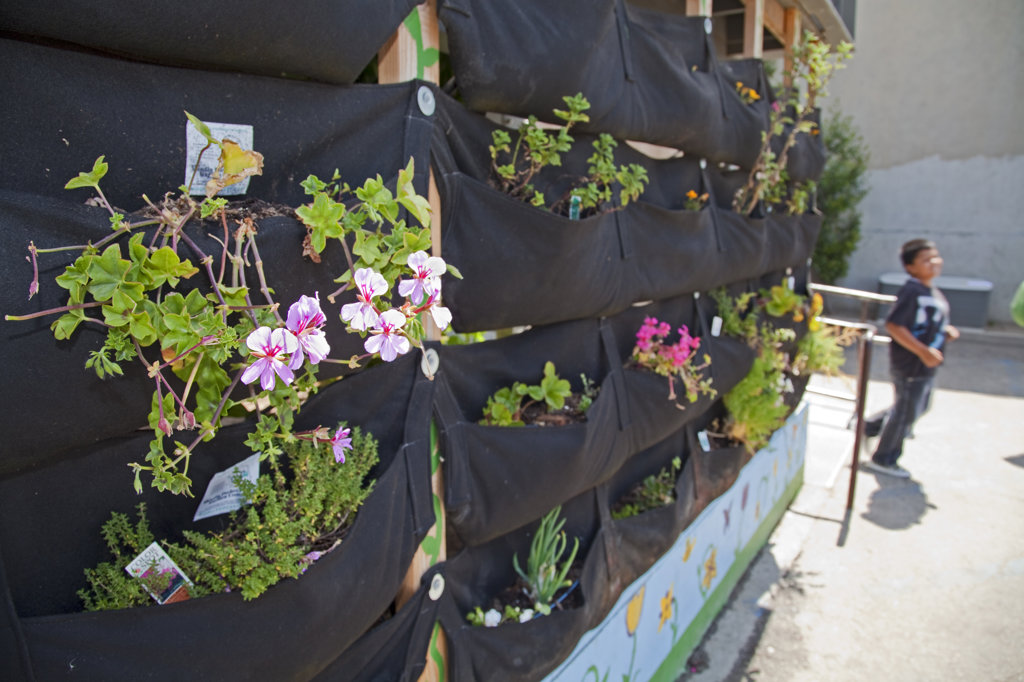 Stock Photo: 4055-5938 Woolly Pocket vertical garden hangers at the Downtown Value School, a charter school in downtown Los Angeles and is part of their Woolly School Garden program. The Woolly Pocket hangers are created from 100% recycled materials. The school uses gardens to teach students gardening and also has a flower and produce garden that goes around the school grounds, a small greenhouse and a worm compost bin that students collect for after each meal. Los Angeles, California, USA