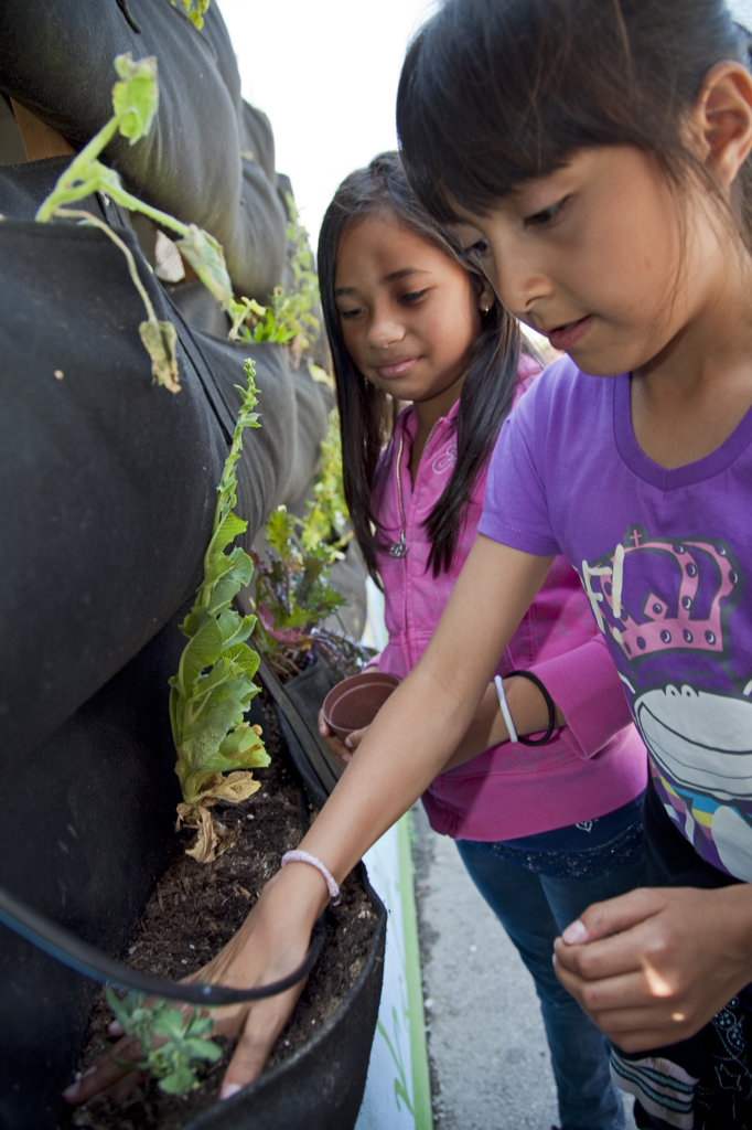 Stock Photo: 4055-5947 School Children learn about and tend the vertical garden at the Downtown Value School, a charter school in downtown Los Angeles. The vertical garden is provided by Woolly Pocket and is part of their Woolly School Garden program. The Woolly Pocket hangers are created from 100% recycled materials. The school also has a flower and produce garden that goes around the school grounds, a small greenhouse and a worm compost bin that students collect for after each meal. Los Angeles, California, USA