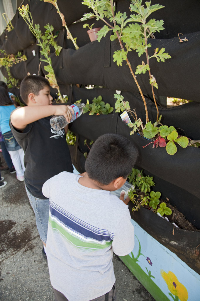 Watering plants. School Children learn about and tend the vertical garden at the Downtown Value School, a charter school in downtown Los Angeles. : Stock Photo