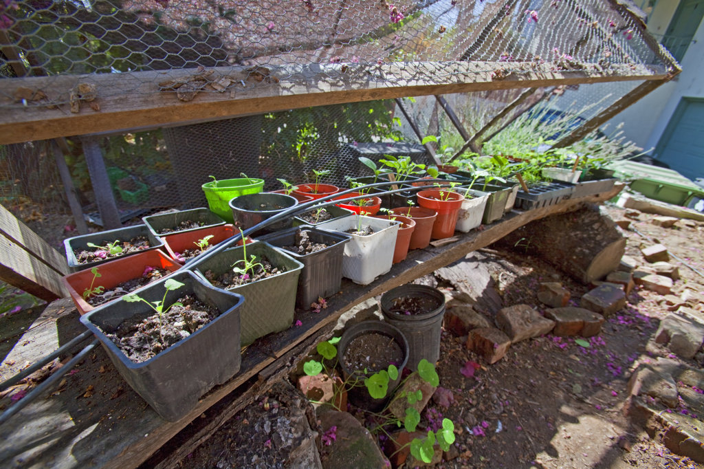 Seedlings at the entrance to Edendale Farm. Edendale Farm is a model of permaculture and urban farming, a closed system of organic gardening, water and energy conservation and sustainable design. Silver Lake, Los Angeles, California, USA : Stock Photo