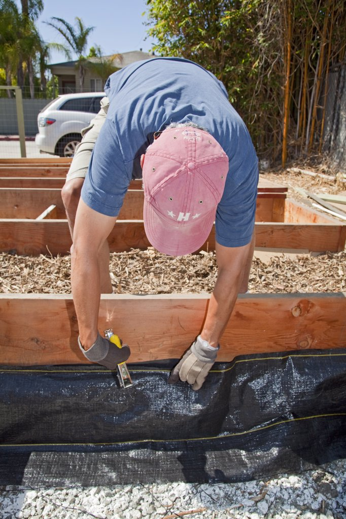 July 24, 2010. Stapling the Weedcloth for the final preparations of the planting beds at the Venice Community Garden. The 2 foot deep beds are layered with 3 inches of rocks as a buffer between the roots and the bad soil below, but will still allow water to drain. : Stock Photo