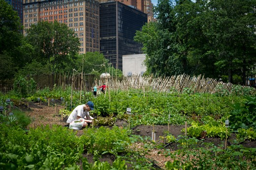 The newly opened Urban Farm in Battery Park in Lower Manhattan in New York on Sunday, June 19, 2011. The Urban Farm occupies a full acre and has 80 organic vegetable plots available to students and the public. : Stock Photo
