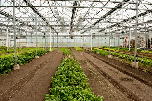 Plants growing in a greenhouse in Stone Barns Center For food and Agriculture, a working four-season farm and educational center 30 miles north of New York City with a mission to create a consciousness about the effect of everyday food choices. : Stock Photo