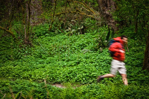 Portland, Oregon, USA, Man trail running with backpack : Stock Photo