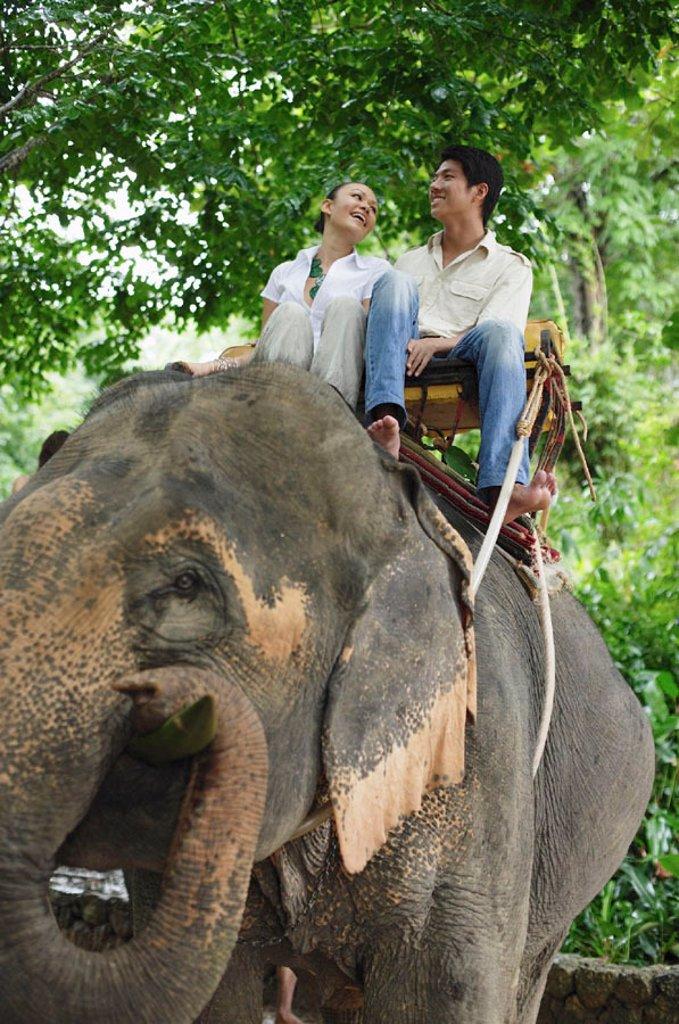 Couple riding elephant, low angle view, Phuket, Thailand : Stock Photo