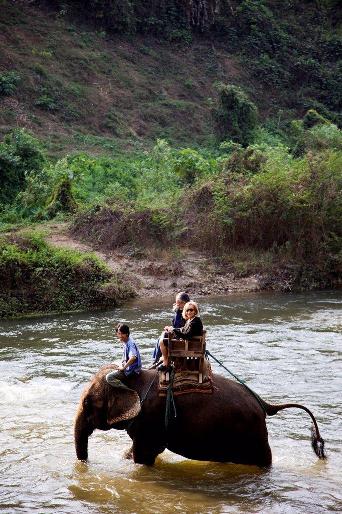Thailand,Chiang Mai,Elephant Camp,Tourist Elephant Trekking : Stock Photo