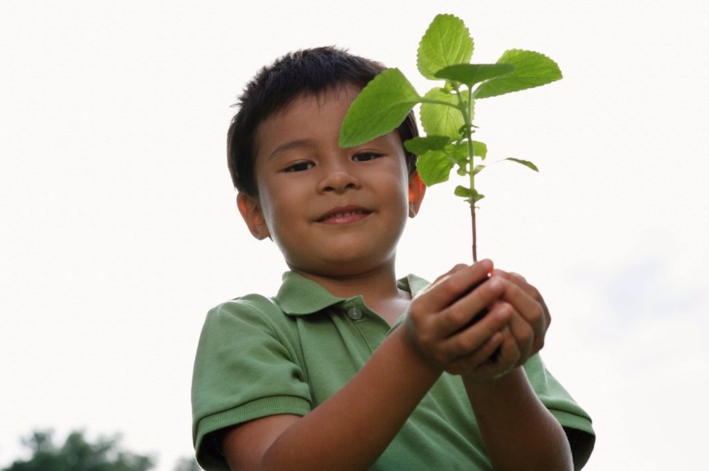 boy holding plant and soil : Stock Photo