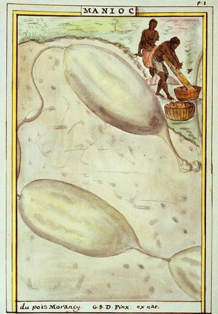Natives scraping manioc or cassava root watercolour by Delahaye 1789 for Florindie ou histoire physico-economique des vegetaux : Stock Photo