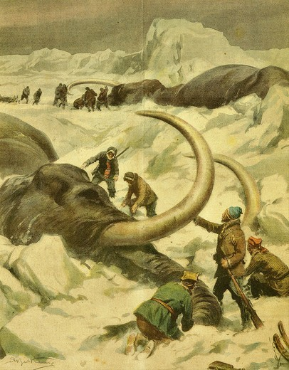 Stock Photo: 4069-271 Discovery of mammoth remains by seal-hunters, Jamal Peninsula 1934
