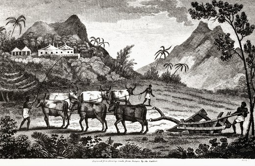 Stock Photo: 4069-2739 Ploughing with oxen, from Travels in the Interior Districts of Africa, 1797, by Mungo Park, 1771-1806, Scottish explorer of Niger River