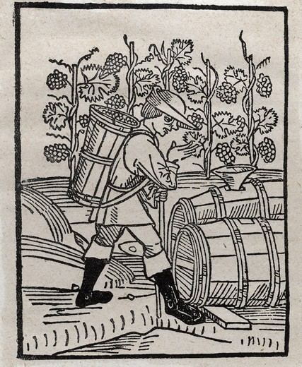 The wine harvest, woodcut by Arnaldus de Villanova, 1499 : Stock Photo