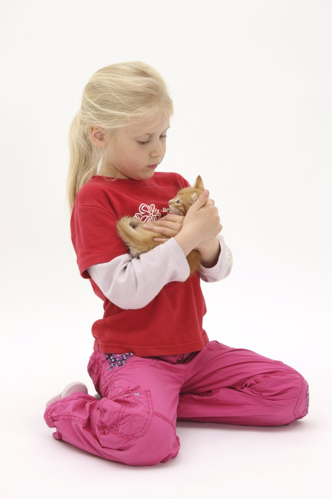 Stock Photo: 4070-13876 Portrait of young girl with blonde hair, aged 7, holding a ginger kitten, aged 7 weeks. Model released