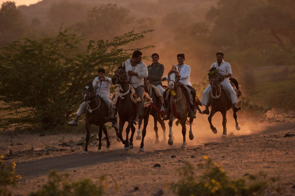 Stock Photo: 4070-18750 A group of traditionally dressed men and boys, mounted on Kathiawari mares, galloping at sunset, Gujarat, India, January 2011