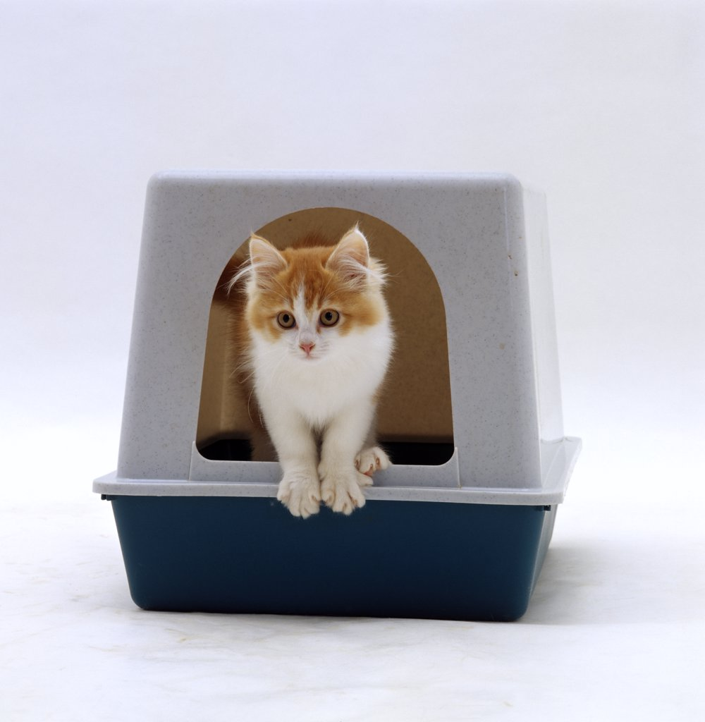great cat toy ideas