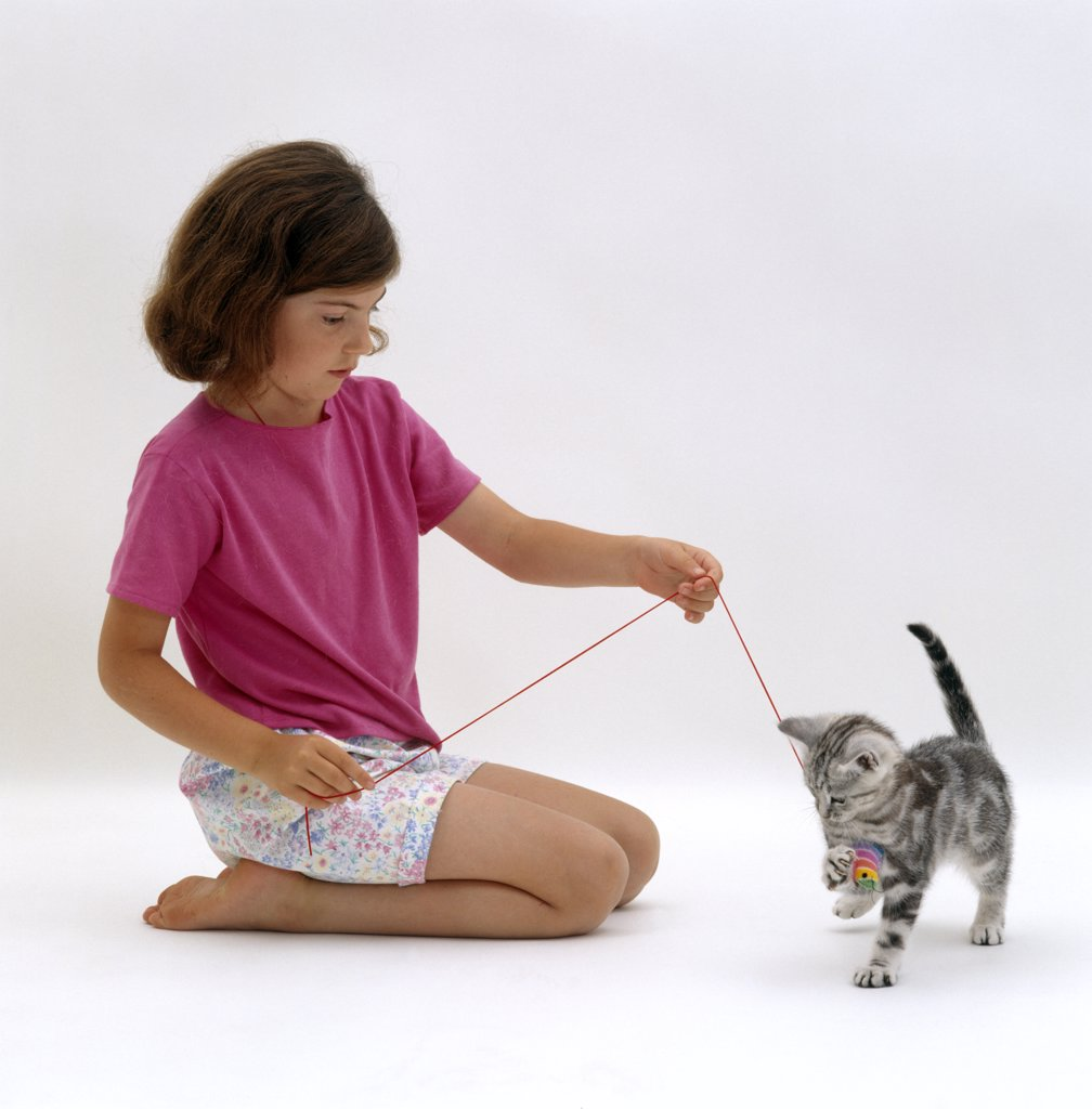 Domestic Cat {Felis catus} girl playing with kitten : Stock Photo