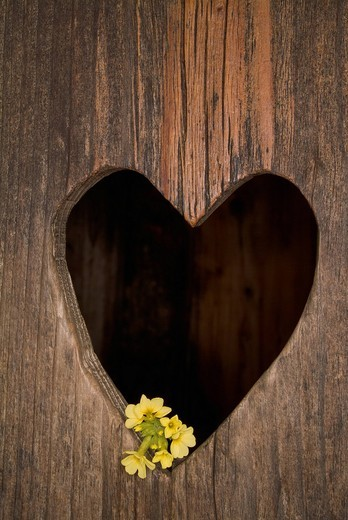 Heart shape cut in wooden door, close up : Stock Photo