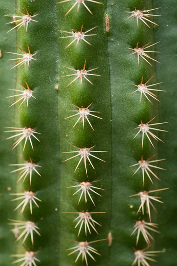 Stock Photo: 4076R-409 USA, Florida, Jacksonville, Close-up of cactus